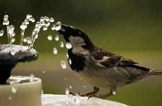 su içen kuşlar ile ilgili görsel sonucu